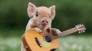 pig-guitar-cute-animal